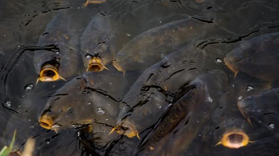 Sjednica Grupacije prerade ribe u ŽK Split